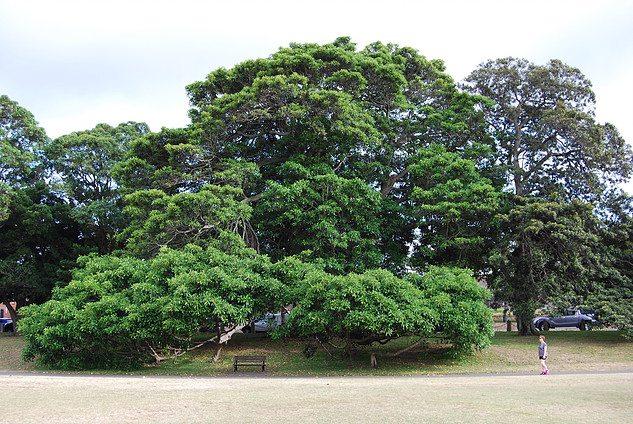 tree-moore-park