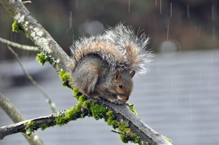 young-squirrel-photo-mike-houck-dsc_0197