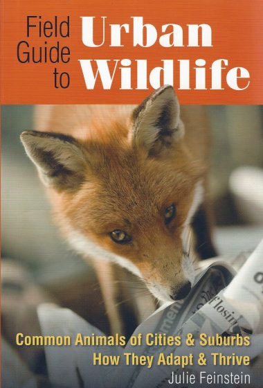 cover-field-guide-to-urban-wildlife