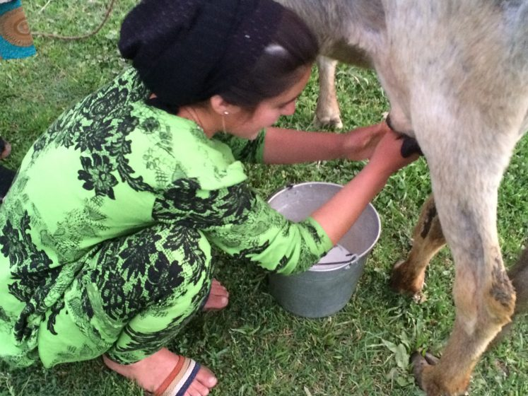 tajik-young-women-milking-cow
