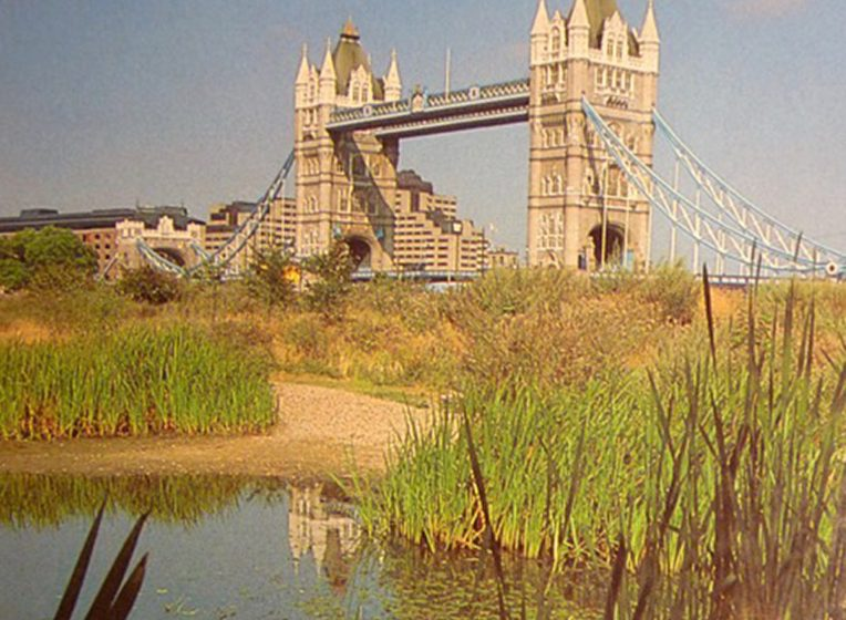 Celebrating the First Ecology Parks in London