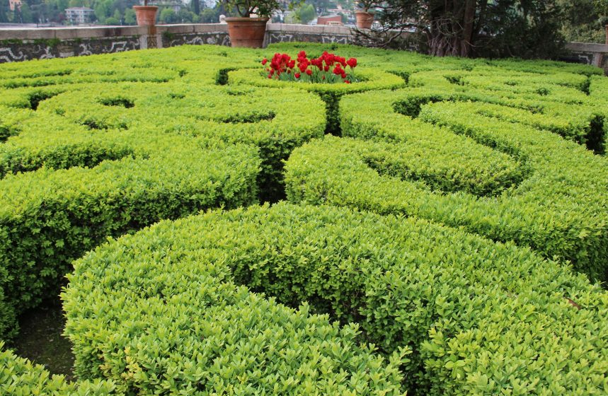 Topiary And The Art Of Training Plants Download Pdf