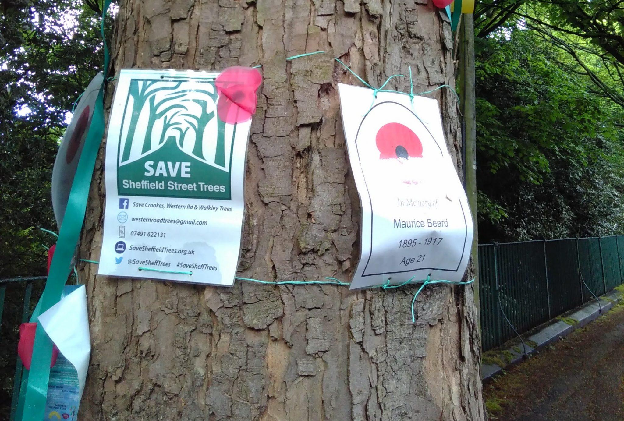 Cut down trees. Trust the professionals 68