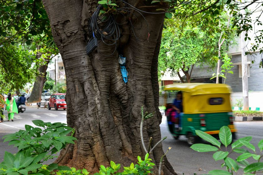Trees form an integral part of daily life in south Bangalore streets, used to store bags, and coiled telephone wires. Photo credit: Suri Venkatachalam