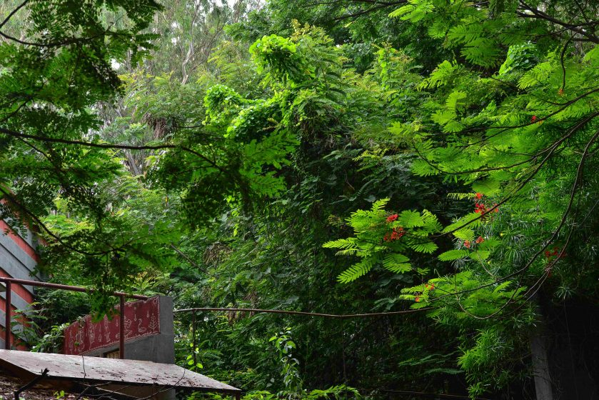Trees of different species form a connected canopy of green above inner residential streets. Photo credit: Suri Venkatachalam