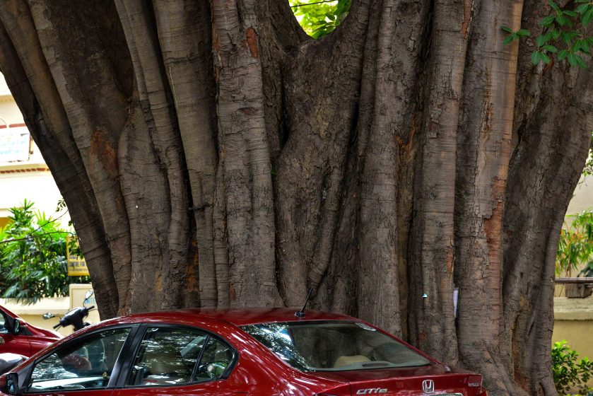 A larger car seeks out the shade of a giant tree. Photo credit: Suri Venkatachalam