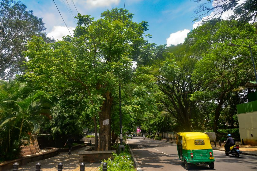 Trees planted at pre-determined spacing, and neatly confined to defined areas on a street near Mahatma Gandhi road in the Bangalore Cantonment. Photo credit: Suri Venkatachalam