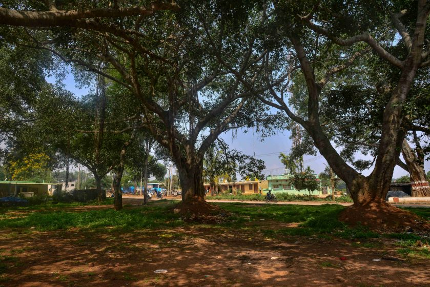 A wooded grove in the south-eastern periphery of Bangalore. Photo credit: Suri Venkatachalam