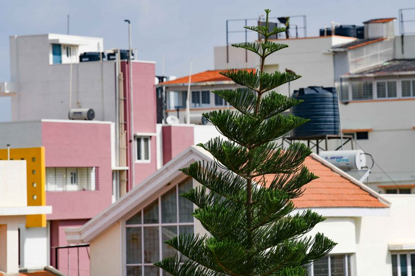 A residential area adjacent to Sarjapur road, with a single ornamental tree interspersing the view of concrete rooftops. Photo: Suri Venkatachalam
