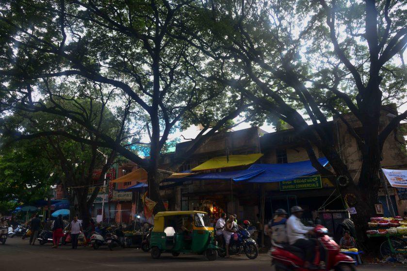 Sprawling rain trees dwarf the skyline in a Basavanagudi shopping area. Photo credit: Suri Venkatachalam