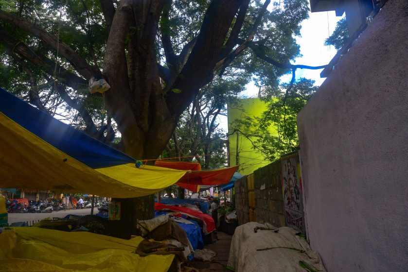 A series of vegetable carts, covered with plastic, are lined up in the early morning hours below the large trees on the busy DV Gundappa road in Basavanagudi, awaiting the start of business. Photo credit: Suri Venkatachalam