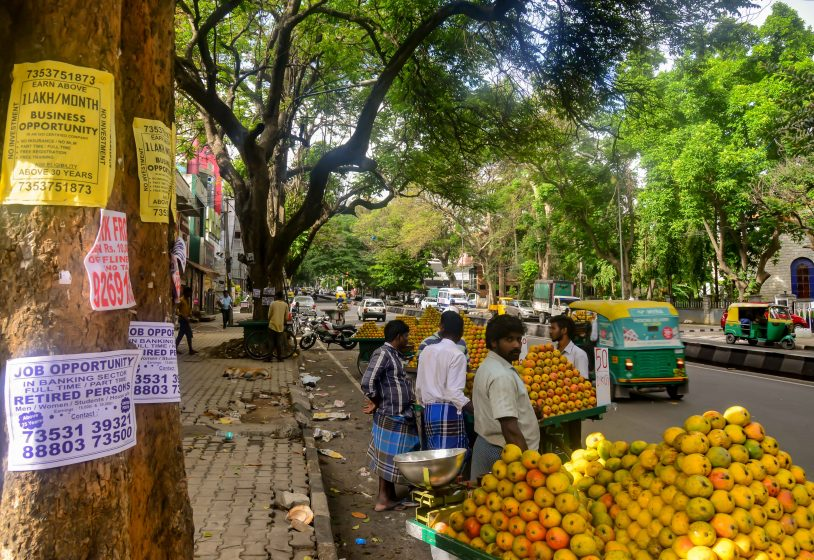 Even mango sellers seek out the shade of trees, to keep their mangoes from spoiling in the harsh overhead sun. The trees serve a dual purpose here: their trunks are plastered with flyers, aiming to entice eager job-seekers. Photo credit: Suri Venkatachalam