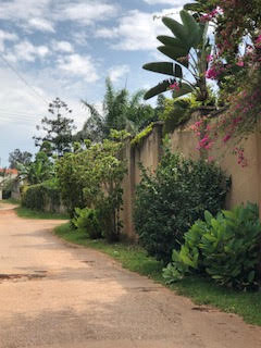 Walls that Talk: Green Fences in Kampala City – The Nature of Cities