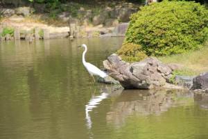 nagoya urban park biodiversity