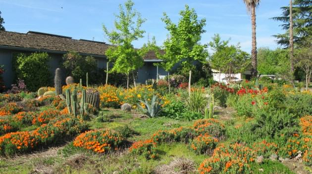 NativeGarden-Fresno.Photo—Katti&Gupta