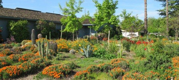 NativeGarden-Fresno