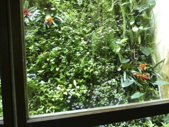 This is one of the many biodiversity-filled windows in Dr Thomas Easaw's house in Singapore. Photo: Cheryl Chia, National Parks Board, Singapore