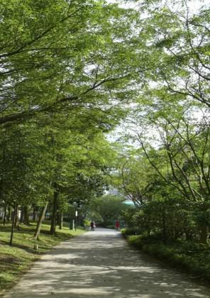 Tree-lined and shrub-lined park connector in Singapore.  Photo: National Parks Board, Singapore