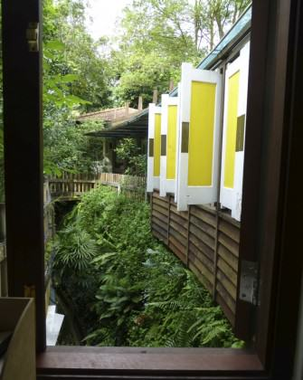 Another biodiversity-filled window view in Dr Thomas Easaw's house. Photo: Cheryl Chia, National Parks Board, Singapore