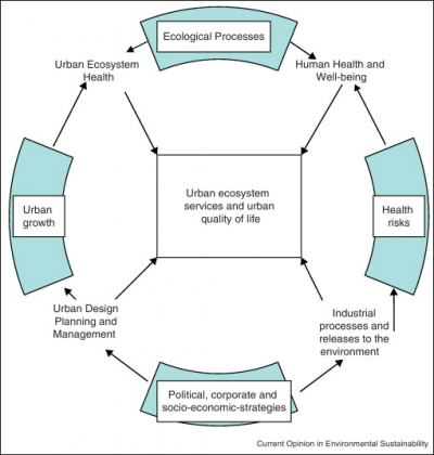 Simple diagram of key factors in the relationship between urban ecology and human health and well-being. Credit: http://www.sciencedirect.com/science/article/pii/S1877343512000966