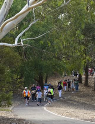 Volunteer-led community walking in a city park, Melbourne. Photo: Parks Victoria