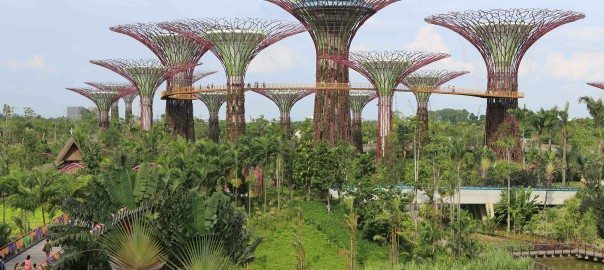 'Supertrees', Singapore. Photo credit: Wikimedia Commons: http://commons.wikimedia.org/wiki/File:Supertree_Grove,_Gardens_by_the_Bay,_Singapore_-_20120712-02.jpg
