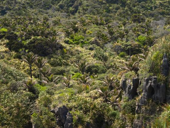 The subtropical forests at Punakaiki, Paparoa National Park, NZ. Photo: Glenn Stewart