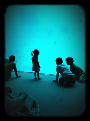 Children captivated by an aquarium exhibit. Photo: Andre Mader