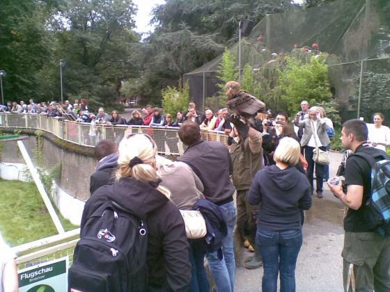 Crowds gather at hourly intervals in Cologne Zoo to watch an eagle alight on its handler's arm as he stands among them. Photo: Andre Mader
