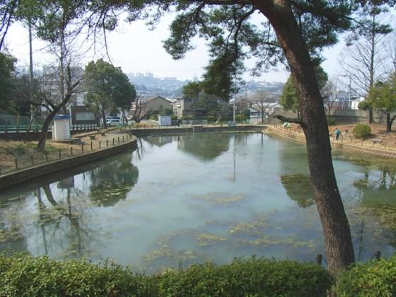 The project site before the renovation. Egeria densa, an exotic species, dominated the water. Photo: Keitaro Ito
