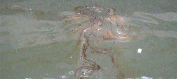 Oily sheen on Newtown Creek, 7 July 2006. Photo: Riverkeeper