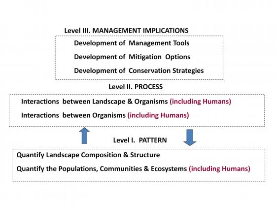 Fig. 4 The relationship between science (Level 1 and Level 2) and effective ecological conservation, management and restoration (Level 3). It is difficult to achieve useful and effective outcomes in Level III without good information in Levels II and I.