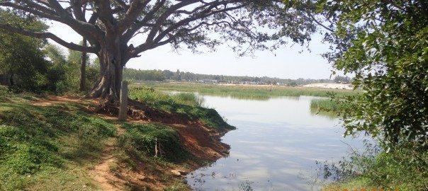 Manjunath-B-An-intact-peri-urban-lake-managed-by-the-local-village.jpg