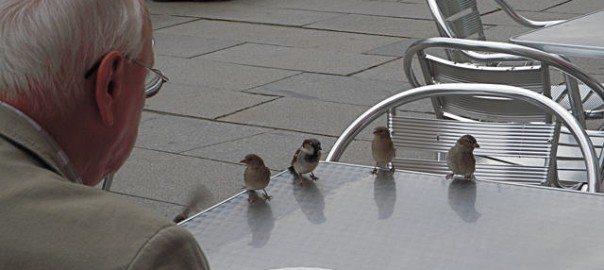 tea with sparrows