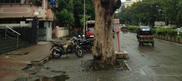 MumbaiStreetTree
