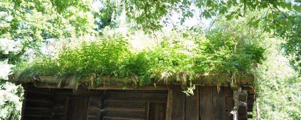 Shadowed green roof. Skansen Museum, 2013
