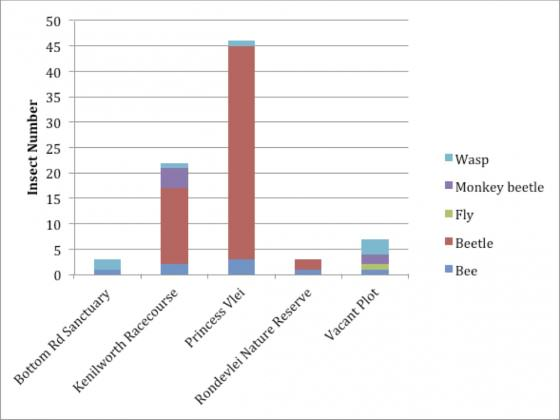 Bar graph representing the total number of insect morpho- species, collected from pan trapping