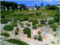 The Princess Vlei garden has been constructed by local school children. Photo: Georgina Avlonitis