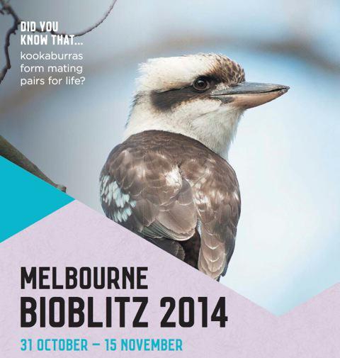 CoM BioBlitz Poster Cropped