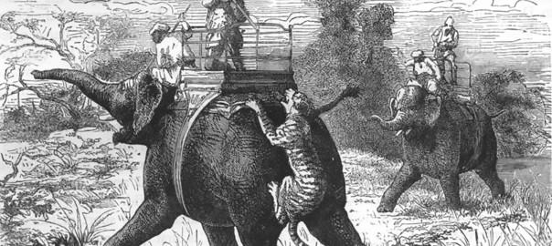 Tiger hunting in India 1880'sFeature